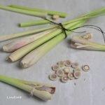 lemongrass photo